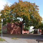 Große, alte Bäume